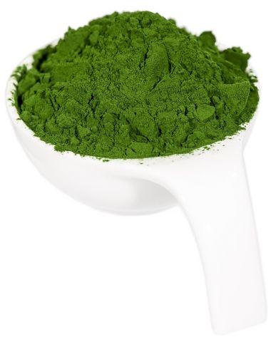 Alge klorela prašek